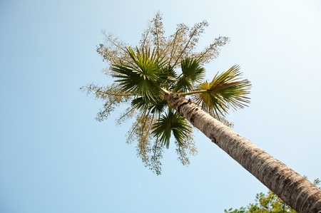 palm tree with sky background photo