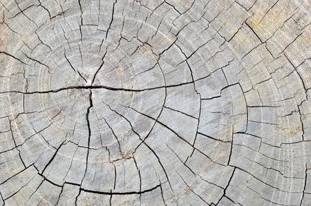 pattern on old wooden texture background, pattern of tree stump photo