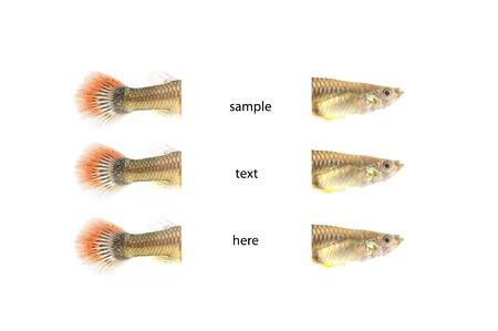 fishs on the background,isolation,think box,idea box Stock Photo - 14783408