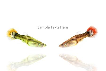 fishs on the background,isolation,think box,idea box  Stock Photo - 14783463