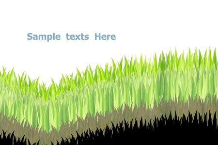 grasses on white background