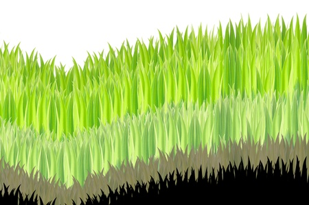 layer of green grasses on white background Stock Photo