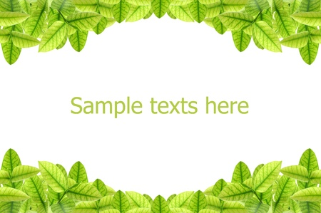 pattern of  leaves on white background Stock Photo - 15115751