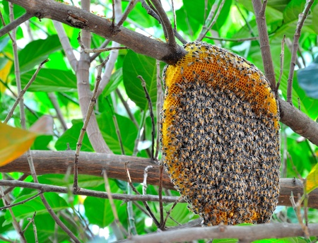 honeycomb on the tree photo