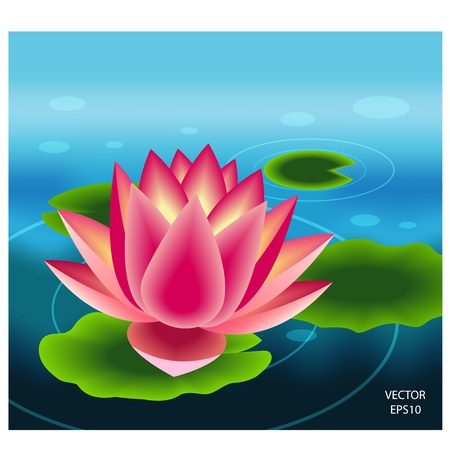 Beautiful pink lotus flower Vector