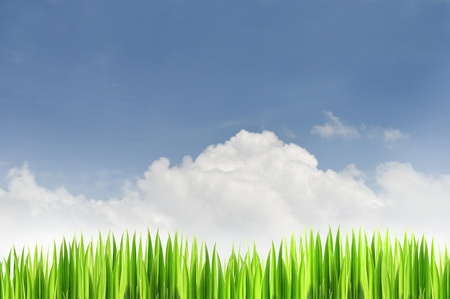 Green grass and blue sky background in a nice day photo