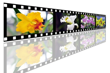 Flower photo with film strip isolated on white background photo