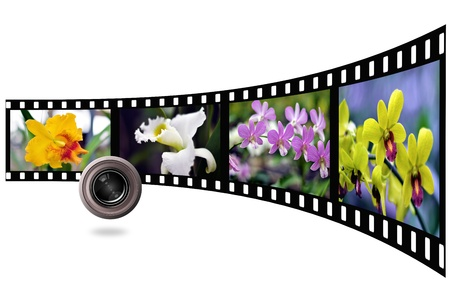 Flower and lens photo with film strip isolated on white background photo