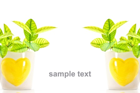 find similar images: Save to a lightbox  find similar images share  cup of tree  save the green world