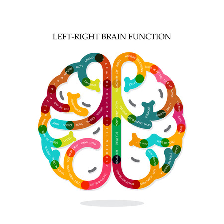 brain function: Creative infographics left and right brain function ideas on background,design for poster,flyer,cover,brochure,diagram or presentation template