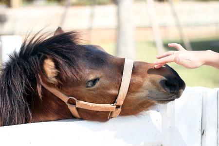 head close up: Horse.Horse head close up. Stock Photo