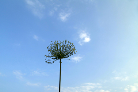 florescence: blue sky with flower Stock Photo