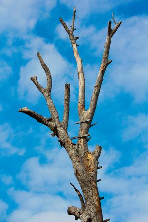 arboles secos: �rboles muertos  Foto de archivo