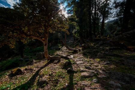 Khaliya Top Trek in Munsyari, Uttarakhand, India