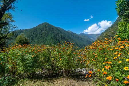 General Scenery in Sankri Range, Uttrakhand, India