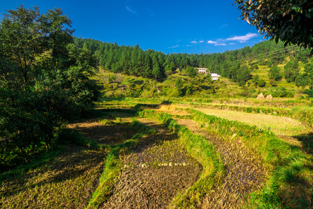 Agricultural fields in Garhwal Uttrakhand, India 免版税图像