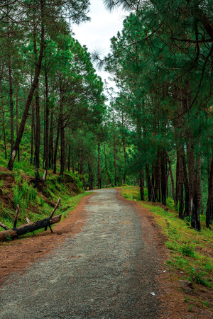 Empty Roads in Tree Forest - Himalayas, Bach Kande, Uttrakhand, India