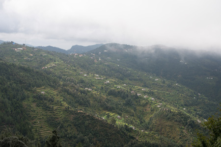 Stepping Farms in Uttrakhand