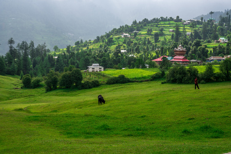 Panoramic view of green meadows in himalayas, Great Himalayan National Park, Sainj Valley, Himachal Pradesh, India 写真素材