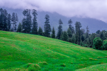 Green meadows in himalayas, Great Himalayan National Park, Sainj Valley, Himachal Pradesh, India 写真素材