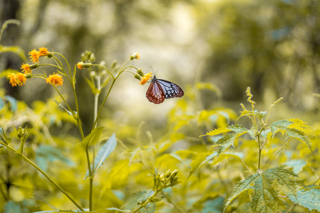 Photo of Butterfly on Yellow Flower in Himalayas, India Zdjęcie Seryjne