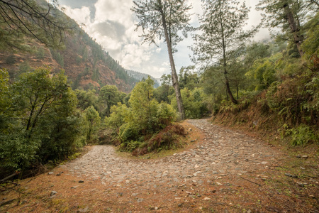 High altitude road in Himalayas surrounded by deodar tree - India