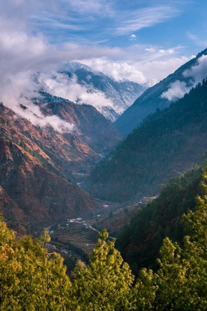 Landscape in Himalayas surrounded by deodar tree - India Stock Photo