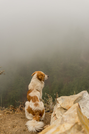 Fog in Himalayas - Dog in Mountains - India