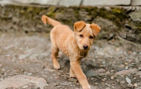 Photo of Indian dog in Himalaya Mountains, Himachal Pradesh, India Stock Photo