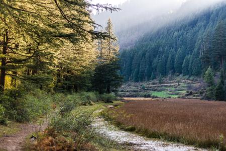 Pundrik rishi lake - Photo of Field surrounded by deodar tree in mountains - himalayas Фото со стока