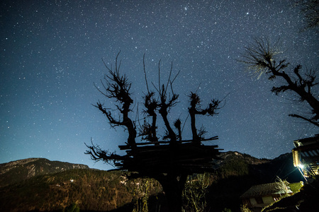 Starry night sky over tree in himalayas in India