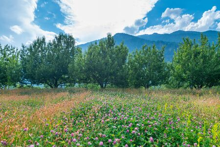 Photo of apple garden in himalayas - India