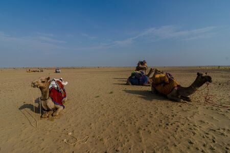Jaisalmer, Rajasthan, India - July 29, 2019 : Camels Taking Rest in Thar desert -