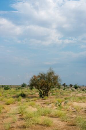 Green Grass in Thar Desert, Rajasthan Stock Photo