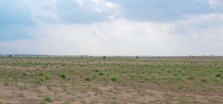 Green Grass in Thar Desert, Rajasthan Stock Photo