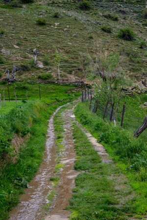 Beautiful Local Path Surrounded by Nature in Himalayas -