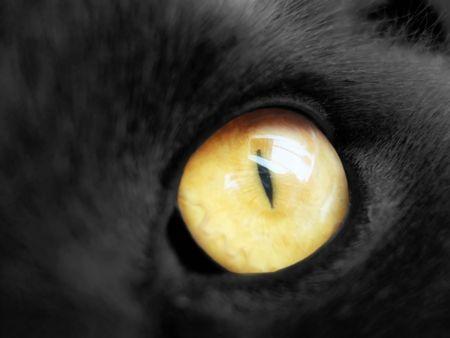 part of gray cat face, orange eye                 photo