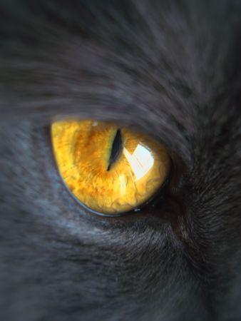 macro animals: part of gray cat face, orange eye