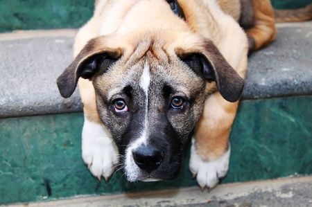 This is a photo of sad puppy on the stair Stock Photo
