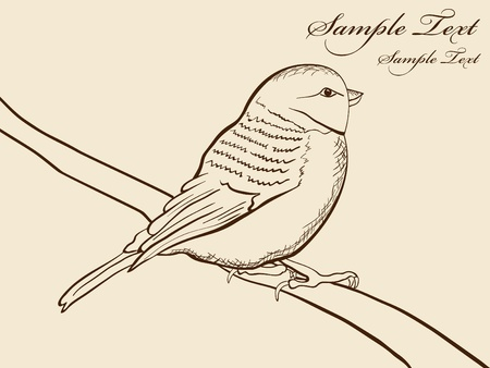 painted lines:   hand draw picture of tomtit bird