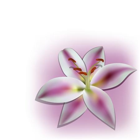 lilia: picture with realistic lilia