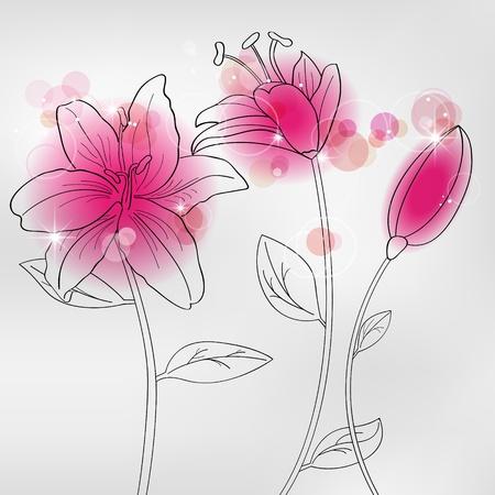 lilia: im�genes con flores de lilia rosas  Vectores