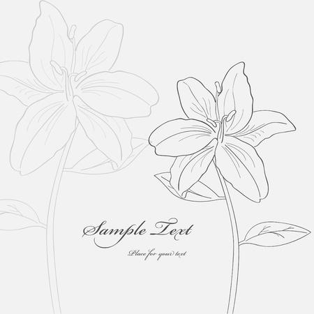 lilia: im�genes con flores de lilia