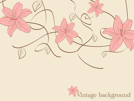 lilia:  im�genes con flores de lilia Vectores