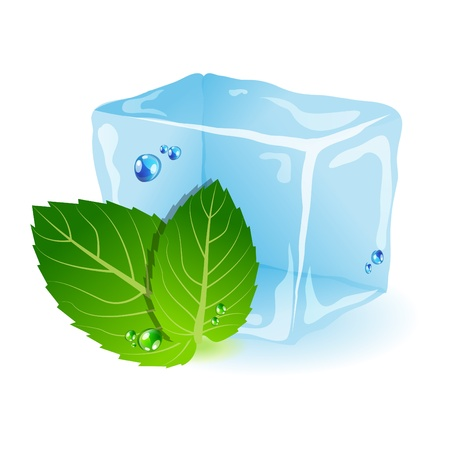 ice and mint leaf Vector