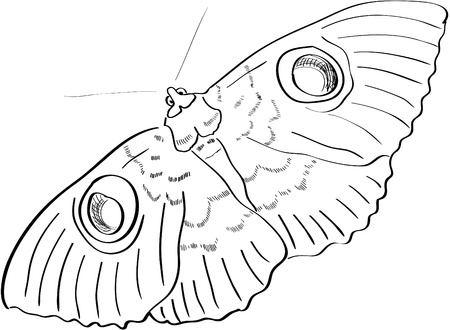 butterfly hand: Vector hand drawn butterfly Illustration