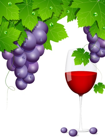 background with blue grapes Stock Vector - 10691538