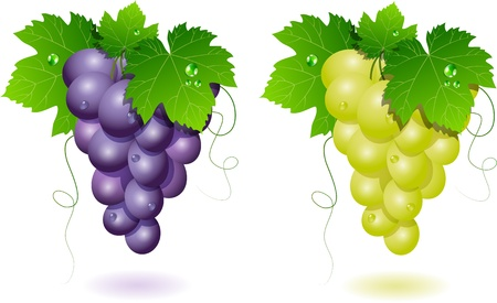 Vector grapes: blue and white Stock Vector - 10847460
