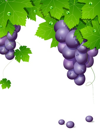 A background with blue grapes Vector