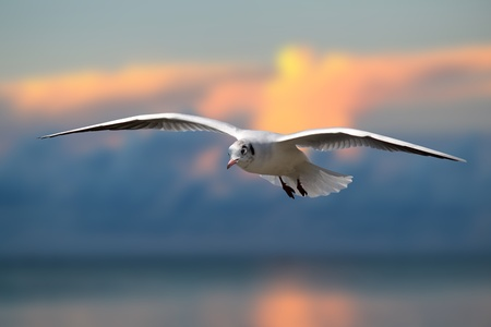 Photo of flying seagull photo